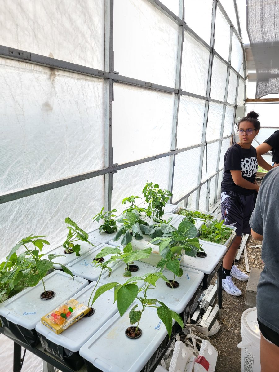 Alyssa Jones looks at the plants already about six inches tall that are sticking out of plastic containers with a hole cut in the center.